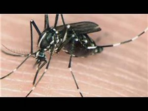 Enemy Sighted: Get to Know a Mosquito